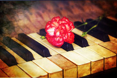 Flower on piano keys, vintage picture. Royalty Free Stock Images