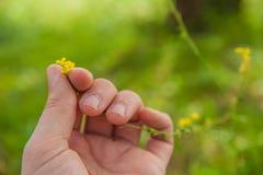 Flower picking Stock Photos