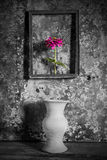 Flower in a picture frame black and white,and vase on wooden. Background,still life Royalty Free Stock Photos