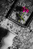 Flower in a picture frame black and white,and vase on wooden Royalty Free Stock Photo