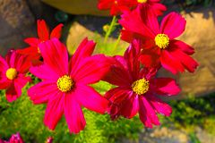 Flower  pictures thailand royalty free stock photos
