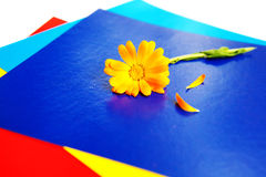 Flower on the pieces of paper Stock Photos