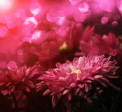 Flower pink Royalty Free Stock Photos