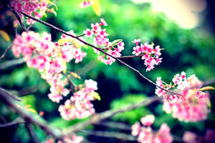 Flower Pink Stock Photos