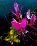 Flower. Pink flower Stock Photos