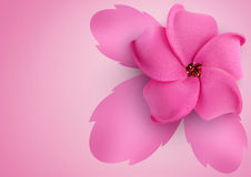 Flower on pink background Stock Photography