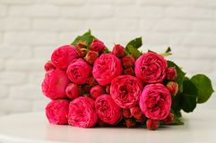 A flower pink background for design. stock image