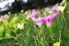 Flower pink. Beautiful summer nature Royalty Free Stock Photography