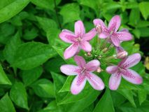 Flower. The pink color flower Stock Photography