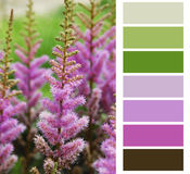 Flower pink color chart. Palette swatches stock photography