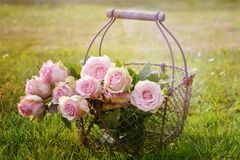 Flower, Pink, Flower Arranging, Plant Stock Photos