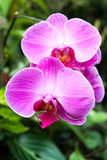 Flower, Pink, Flowering Plant, Flora Stock Photo