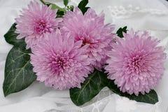 Flower, Pink, Flowering Plant, Plant stock image
