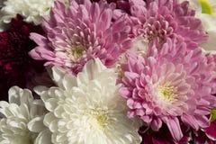 Flower, Pink, Flowering Plant, Purple royalty free stock image