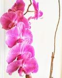 Flower, Pink, Flowering Plant, Purple stock images