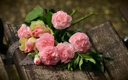 Flower, Pink, Flowering Plant, Rose Royalty Free Stock Image