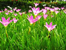Pink flower in the forest and beauty background royalty free stock photos