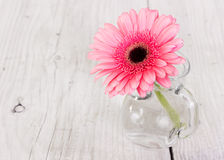Flower pink gerbera in a glass vase Stock Images