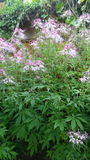 Flower pink green so beautiful city Stock Photo