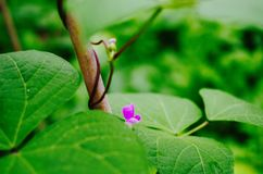 Flower. The pink flower and green leafs is very Royalty Free Stock Photography