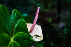 Flower. Pink flower nature green pointy royalty free stock photography
