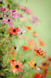 Flower pink orange garden Stock Images