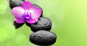 Flower pink orchid and black stones. Royalty Free Stock Photos