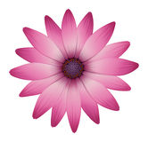 A flower with pink petals Stock Photography