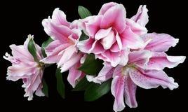 Flower, Pink, Plant, Flowering Plant