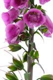 Flower, Pink, Plant, Flowering Plant stock photos