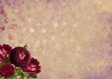 Flower, Pink, Purple, Petal Stock Photos