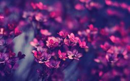 Flower, Pink, Purple, Violet royalty free stock photography