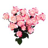 Flower pink roses in heart Royalty Free Stock Photography