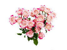Flower pink roses on white Royalty Free Stock Image