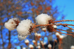 Flower with a pins under the snow against blue sky Stock Images