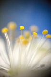 Flower pistil. Flower pistil at a short distance stock photos