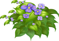 A flower plant Stock Photography