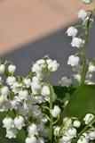 Flower, Plant, Blossom, Flowering Plant stock image