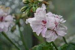Flower, Plant, Blossom, Flowering Plant royalty free stock photos
