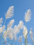 Flower plant with blue sky Stock Photography