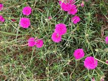 Flower plant. Click by vivo v11 stock image