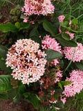 Flower plant. Click by vivo v11 royalty free stock image