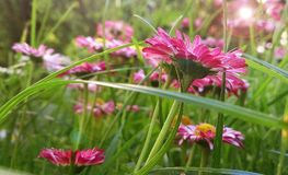 Flower, Plant, Flora, Flowering Plant Stock Photography