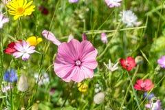 Flower, Plant, Flora, Flowering Plant Royalty Free Stock Photos