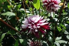Flower, Plant, Flora, Flowering Plant