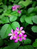 Flower, Plant, Flora, Flowering Plant royalty free stock images