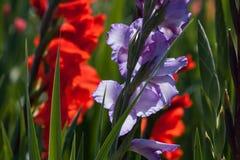 Flower, Plant, Flora, Flowering Plant stock images