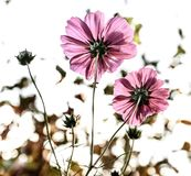 Flower, Plant, Flora, Flowering Plant stock photography