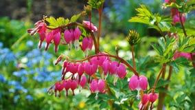 Flower, Plant, Flora, Flowering Plant Stock Image