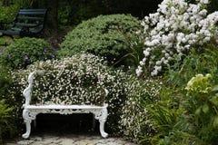 Flower, Plant, Flora, Garden stock image